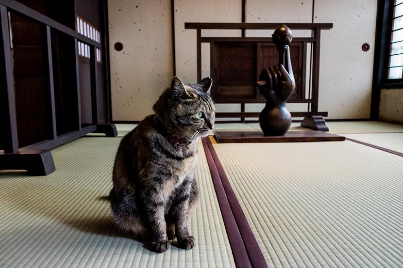 河井寛次郎記念館の看板猫